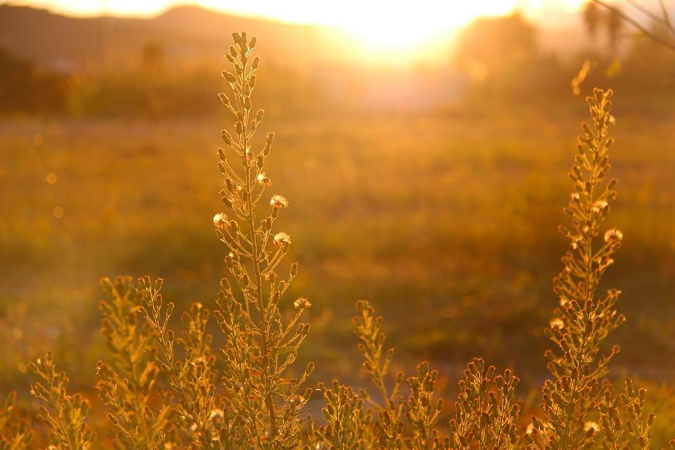 Osteoporosis and the benefits of sunshine